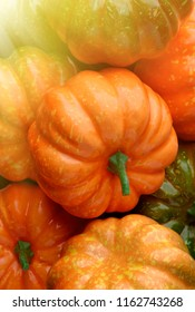 Group of orange and green pumpkins, closeup shot, sunlight effect, seasonal background