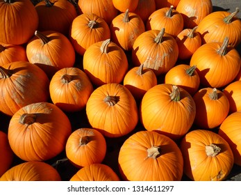 group of orange pumpkins at a farm stand