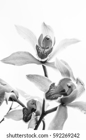 Group orchid flower black and white
