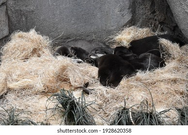 A group of otters snuggle together and sleep in a pile.