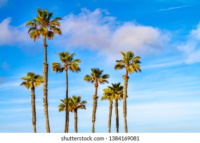 Group of palm trees with clouds and blue sky