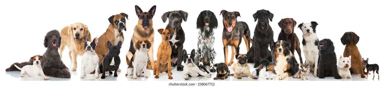 Group of pedigree dogs