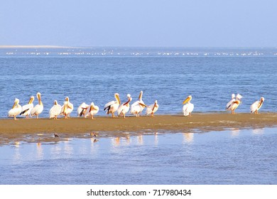 Group of Pelicans, Pelecanidae, at sandbank in Atlantic Ocean, Skeleton Coast line, Namibia, Africa