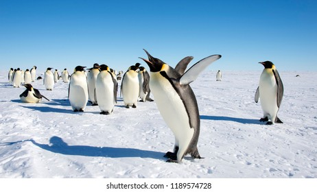 Group of penguins on Iceberg, penguins colony on the iceberg Antarctica, Penguins with chicks, Penguins Jumping from Small Iceberg in Antarctica,