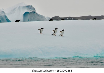 A group of penguins running around together