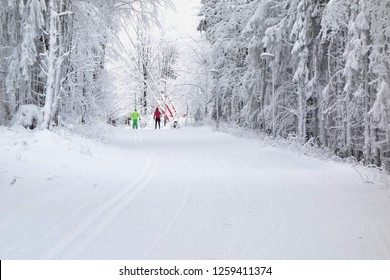 Group of people cross country skiing on beautiful winter forest