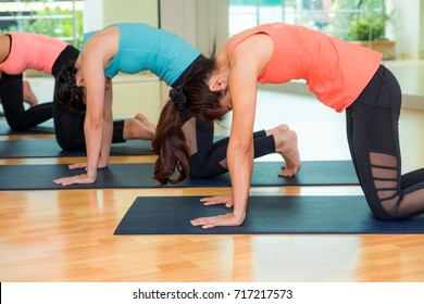 Group of people doing yoga cat poses in studio training room,Balasana poses,wellness and healthy lifestyle