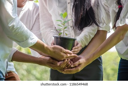 Group of People Hands Holding Cupping Plant Growth Nurture Environmental in park.CSR Corporate social responsibility concept