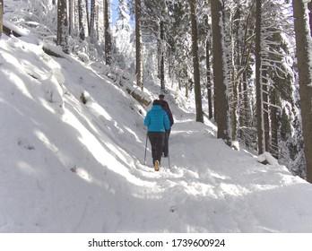 Grupo de personas haciendo senderismo en el bosque de nieve de Ramzova, República Checa