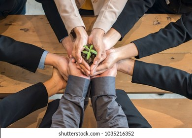 A group of people holding to support the little tree with their hands. The concept of ecology and saving the world.