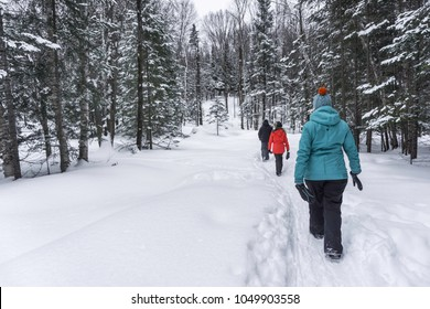 group of people walking in the forest in winter time covered with white snow and wearing colorful clothing