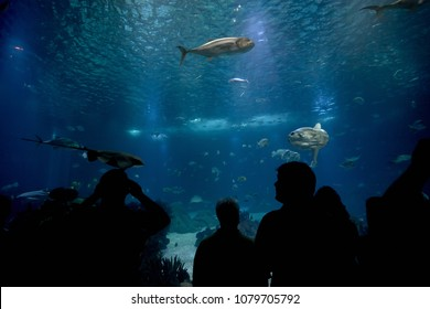 group of people  is watching fish through the glass in a Oceanarium. aquarium