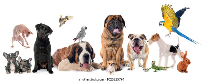 group of pet in front of white background