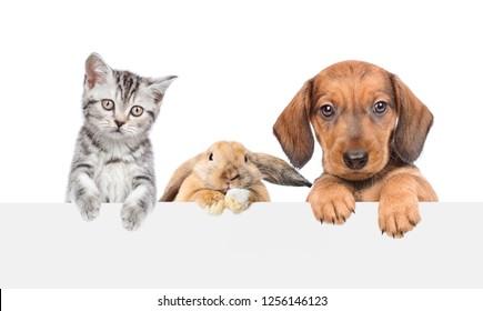 Dog Cat Rabbit Images Stock Photos Vectors Shutterstock