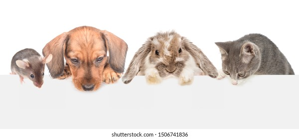 Group of pets  above empty white banner looking down. isolated on white background. Empty space for text