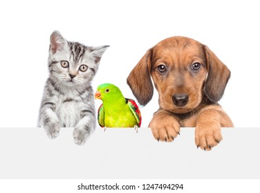 Group of pets - cat,dog and parrot together over white banner. isolated on white background