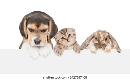 Group of pets  - cat,dog and rabbit, above empty white banner. isolated on white background. Empty space for text