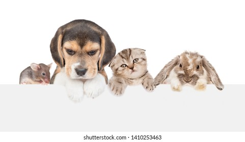 Group of pets  - cat,dog,mouse and rabbit, above empty white banner. isolated on white background. Empty space for text