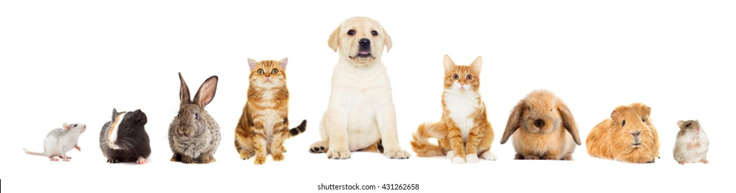 group of pets, looking