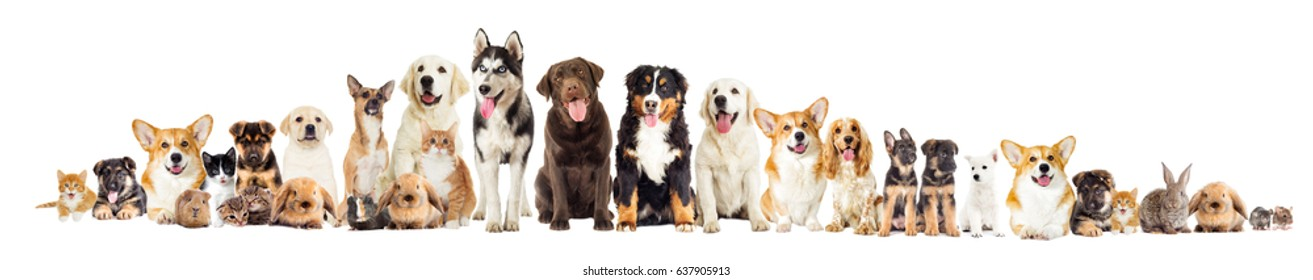 Group of pets on white background looking