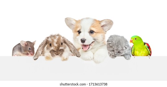 Group of pets  over empty white banner. isolated on white background. Empty space for text