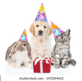 Group of pets with party hats and gift box sitting together in front view and looking at camera. Isolated on white background