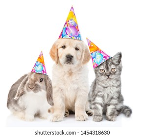 Group of pets with party hats sitting together in front view and looking at camera. Isolated on white background
