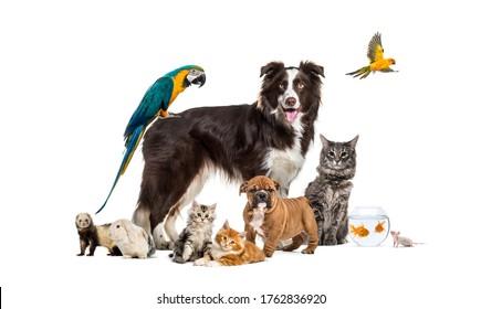Gruppe von Haustieren, die sich um eine Grenzkollie stellen; Hund, Katze, Frettchen, Kaninchen, Vögel, Fische, Nager
