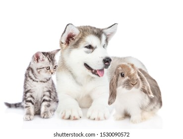 Group of pets - rabbit,cat and dog sitting together in front view and looking away. Isolated on white background.