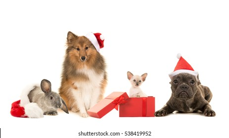 Group of pets, two dogs, cat and a rabbit with christmas hats isolated on a white background
