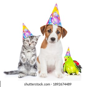 Group of pets wearing party's hats sit together. isolated on white background.