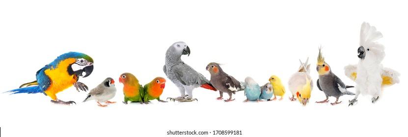 白い背景に群れpf鳥