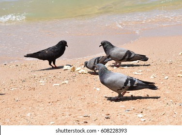 group of pigeon eating food on the beach.