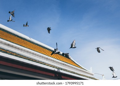 group of pigeon fly above temple rooftop with clear blue sky background