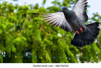 A group of pigeon flying around in the center of Busy Melaka City Malaysia