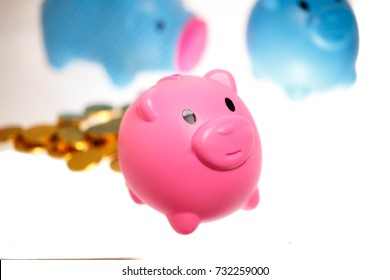 group of piggy bank and golden coin.select focus at the pink one.