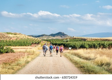 a group of pilgrims walking the camino de santiago along wheat fields and vinyards in la rioja region,  spain