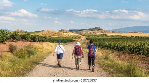 a group of pilgrims walking the camino de santiago vinyards in la rioja region,  spain