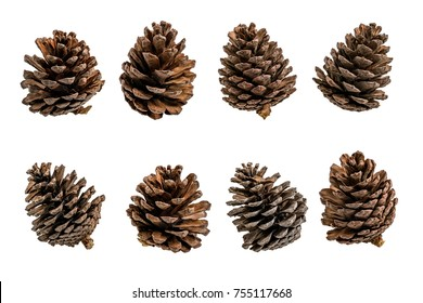 Group of Pine tree fruits isolate on white background