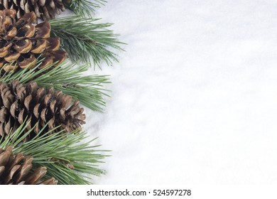 Group of pine trees and some branches on a white snow background.