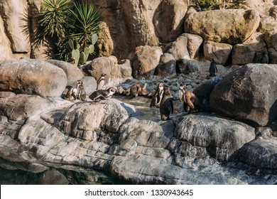 group of pinguins lazing on rocks in zoo, barcelona, spain