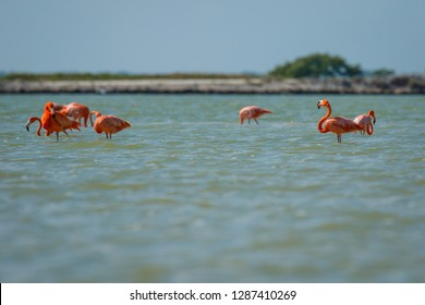 Group of pink flamingos in Las Coloradas in Mexico, famous birdwatching spot in Yucatan peninsula in Mexico