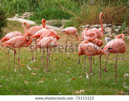 A group of pink