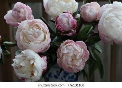 Group of Pink Peonies