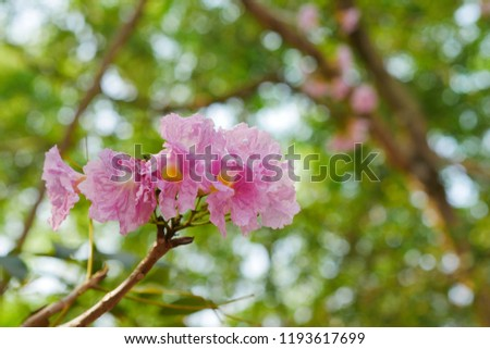 Group Pink Trumpet Flowers On Tree Stock Photo Edit Now 1193617699
