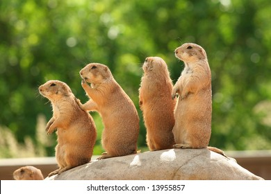 GRoup of prairie dogs standing on top of rock