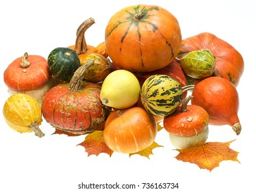 a group of pumpkins lie on the leaves of a maple. white isolated background. color photo