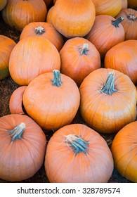 A group of pumpkins in a pumpkin patch