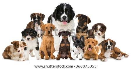 Group Puppies Stock Photo Edit Now 368875055 Shutterstock