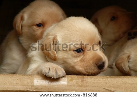 Group Puppies Stock Photo Edit Now 816688 Shutterstock